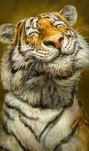 Smiling Tiger by Patrick LaMontagne | iStyles