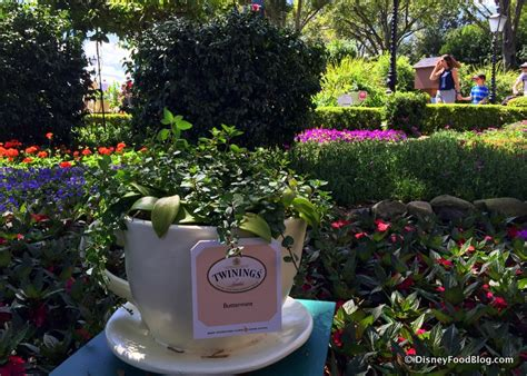2017 epcot flower and garden festival the disney food