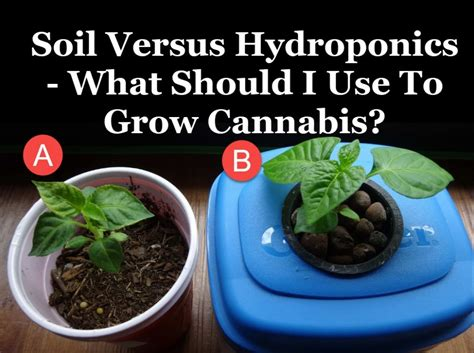 What Should I Use To Grow Cannabis?