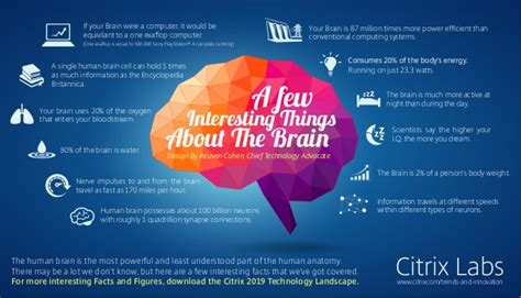 A Few Interesting Things About The Brain [infographic]