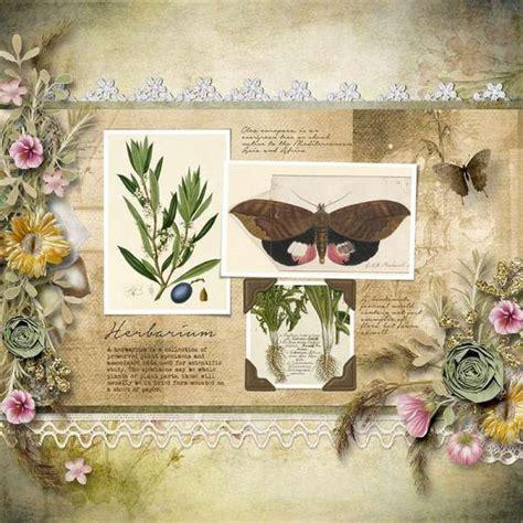 In dieser anleitung zeigen wir ihnen, wie sie ein herbarium anlegen. Die besten 25+ Herbarium vorlage Ideen auf Pinterest | Jahrgang Blumendrucke, Kegelkerzen und ...