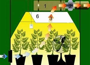 Indoor Grow Anleitung : aufbau eines growrooms bzw einer growbox 1000seeds ~ Eleganceandgraceweddings.com Haus und Dekorationen