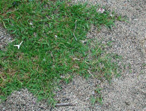 Grasses For The Masses