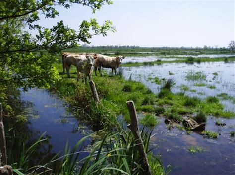 chambre d agriculture de loire atlantique les zones humides disparaissent silencieusement