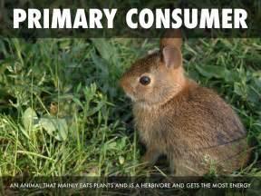 food primary consumer animal walker eats energy
