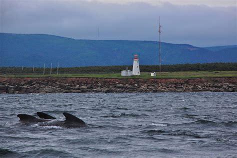 scotia nova whale watching canada honeymoon