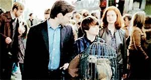 Ginevra Weasley - Harry Potter Wiki