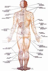 Acupuncture Points  Back Repinned By  Academ Nl    U0026