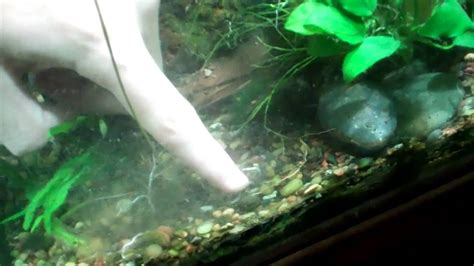 How To Aquascape A Planted Tank by How To Aquascape A Planted Aquarium 125 Planted Tank