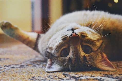 das beste nassfutter fuer katzen test vergleich