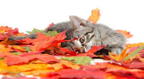 litterbox train  kitten catster