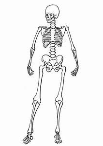 skeleton template cut out big halloween pinterest With skeleton template to cut out