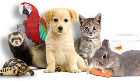pat les animaux de compagnie bien choisir assurance animal domestique toile web