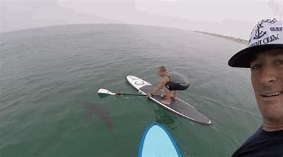 Sharks Gifs California Paddleboard Paddleboarding Paddlers Courtney