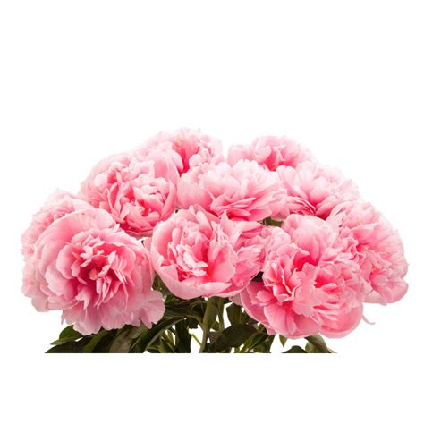 pink salmon peony bouquet peony bouquets gifts