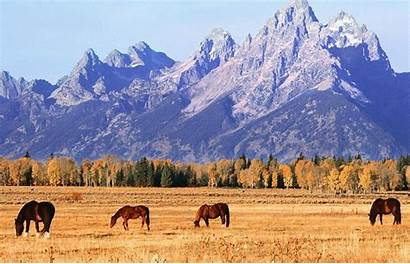 Wild Horse Wallpapers Horses Wallpapercave