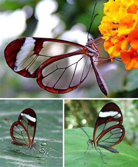 strange  amazing transparent creatures nerdy gaga