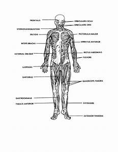 diagrams of muscular system printable diagram With basic system diagram