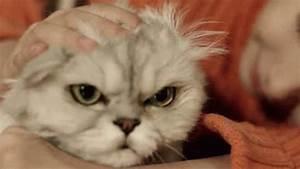 Sad Kitten Gif | www.pixshark.com - Images Galleries With ...