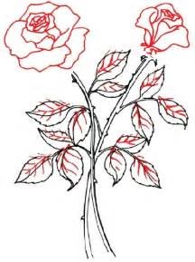 Rose Stem Drawing with Flowers