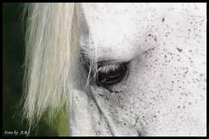 Weißer Schimmel Auf Blumenerde : wei er schimmel foto bild tiere haustiere pferde esel maultiere bilder auf fotocommunity ~ Eleganceandgraceweddings.com Haus und Dekorationen