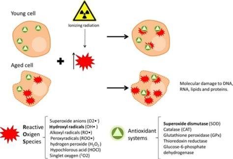 Progressive Loss Of The Pro-oxidant/antioxidant Equilib