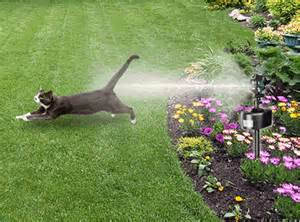 keep cats out of garden how to keep cats out of your garden