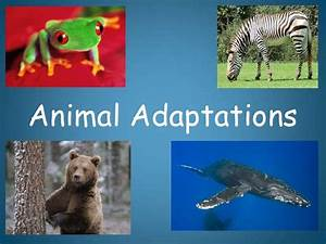 78  Images About Animal Adaptation Plans On Pinterest