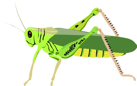 Cartoon Grasshopper Clip Art At Clker.com