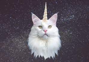 unicorn cat unicorn cat canvas print by oh monday society6