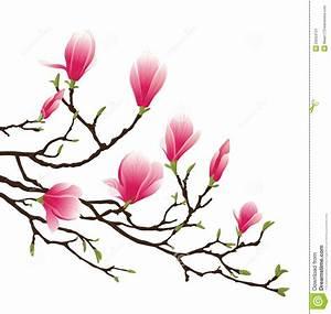 Fleur De Magnolia : fleur de magnolia illustration de vecteur illustration du ~ Melissatoandfro.com Idées de Décoration