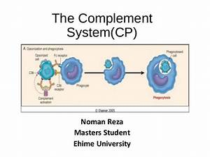 The Complement System Overview