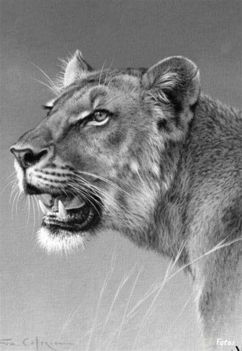 animals art drawings lion big cat art pinterest