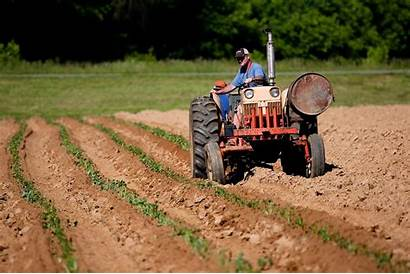Mesin Pertanian Kentang Traktor Loh Berikut Inovasi