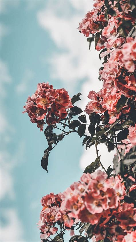 Aesthetic Iphone X Wallpaper Floral by 25 Pretty Iphone Xs Wallpapers Screen Savers