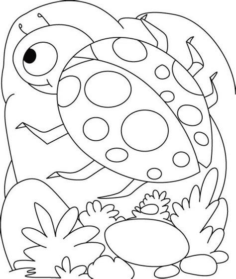 ladybug coloring pages coloring home