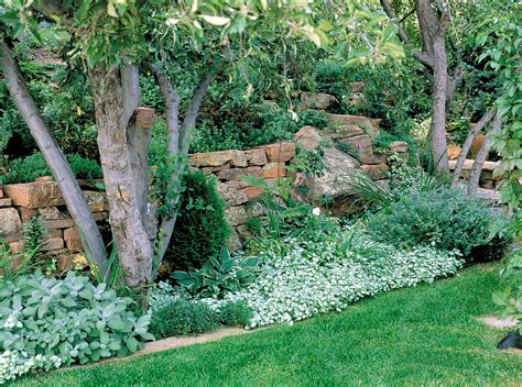 wall plants for shade shade gardens that shine sunset