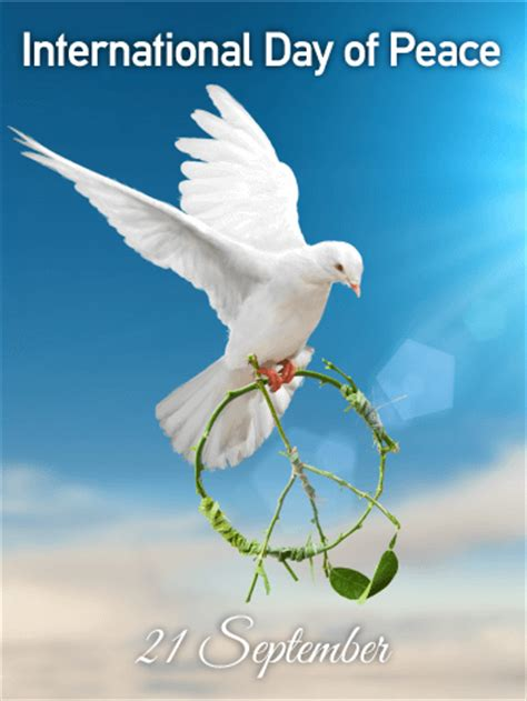 flying white dove international day  peace card