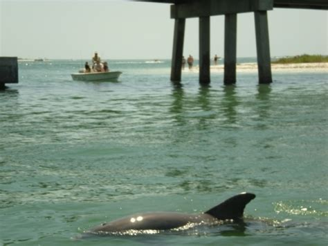 Groupon Boat Rental Naples Fl by Manatee Guides Fort Myers Fl Groupon