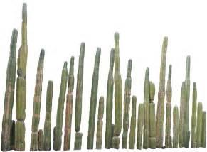 wedding bands malaysia png cactus