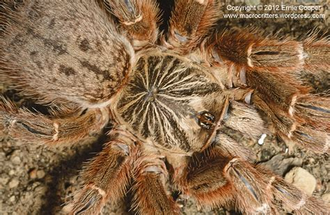 Exciting Lighting by Tarantula Species Macrocritters