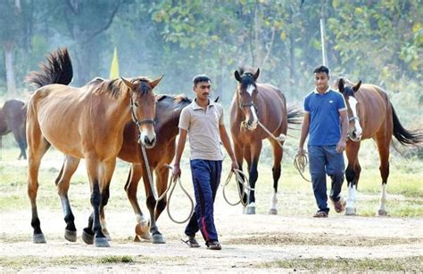 how do horses stay how to keep a horse the new indian express