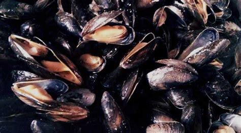 facile preparer des moules marinieres je fouine tu
