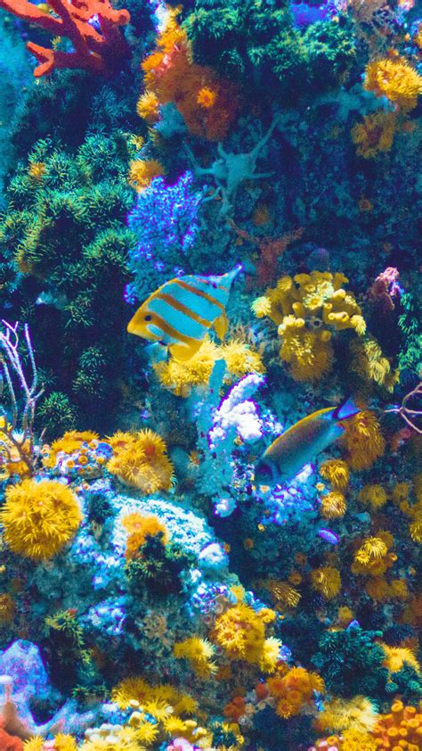 Discover this awesome collection of aquarium iphone wallpapers. Aquarium And Fish iPhone Wallpaper - iDrop News