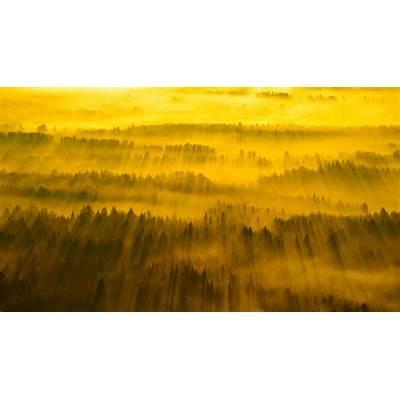 Sunbeams across Tartu County Estonia (© Sven Zacek/Minden
