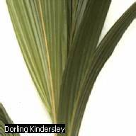 What are the different types of leaf venation in plants ...