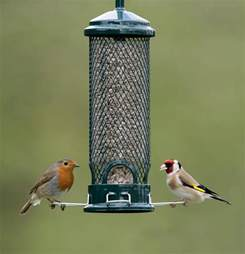 what to feed garden birds the garden