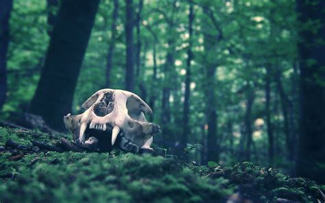 Animal Skull Wallpaper - 4 skull hd wallpapers backgrounds wallpaper abyss