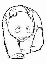 Coloring Pages Pandas Funny Adult Printable Animals Justcolor Children sketch template