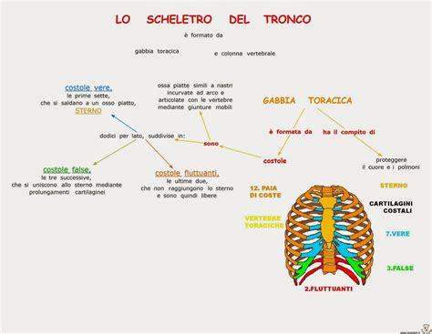 Ossa Della Gabbia Toracica by Paradiso Delle Mappe La Gabbia Toracica